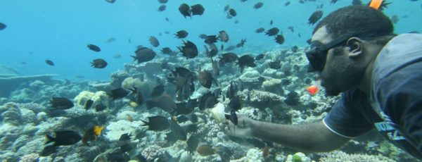 Come Snorkelling and Feed the Fish on Lelepa Island